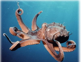 111010_octopus.png